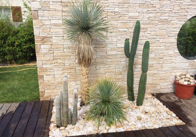 jardin sec de cactus et yuccas exceptionnels
