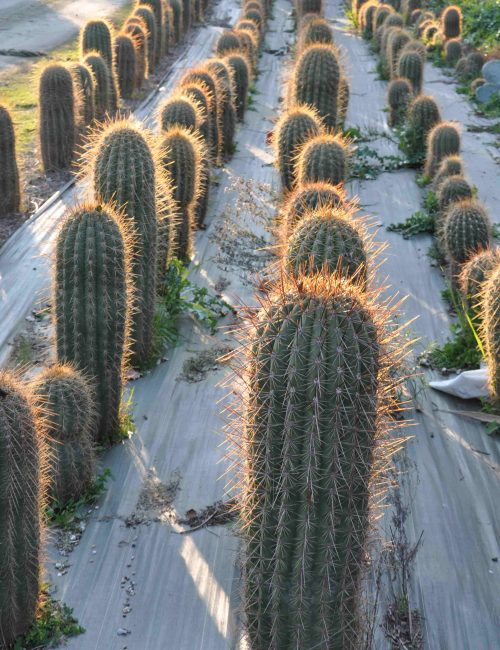 cactus exterieur resistant au froid 28 images craquez